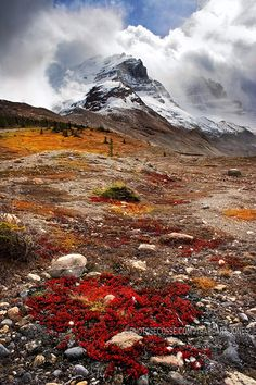 Athabasca, Mountains. Icefields Parkway, Alberta, Canada