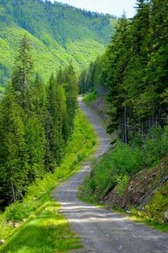 When I say ride, emerald paths fall into my mind. - When I say ride, emerald paths fall into my mind. Beautiful Roads, Beautiful Landscapes, Beautiful Places, Landscape Photography, Nature Photography, Photography Tips, Digital Photography, Back Road, Nature Pictures