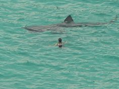 18 Close Encounters With Sharks Caught On Camera