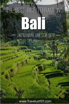 Check out this post for everything you need to know to plan your trip to the Jatiluwih Rice Terraces. You don't want to miss this Bali iconic destination! Bali Travel Guide, Travel Advice, Asia Travel, Solo Travel, Travel Guides, Travel Tips, Travel Destinations, Rice Terraces, Green Rice