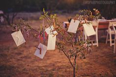 Wishing tree :)