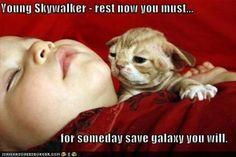 Star Wars and Yoda Cat Funny Shit, Funny Cat Memes, Funny Cute, Hilarious, Funny Stuff, Funny Things, Funny Pics, Random Things, Funny Cartoons