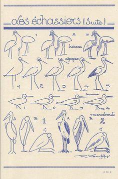 Les animaux tels qu'ils sont. D'après R et L Lambry : Les Echassiers (2)