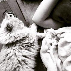 Best Buddy #maincoon #cat#bestfriend #beautiful #sleep #schlafen #süß
