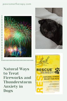 Here are some things that you can do at home that will help if your pet suffers from thunderstorm and fireworks anxiety Natural Stress Relief, Dog Anxiety, Thunderstorms, Alcohol Free, Herbal Medicine, Fireworks, Your Pet, Dog Cat, Herbs
