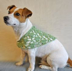 Haha...I have a 12 yr old dog that would look cute in this Grandma shawl.