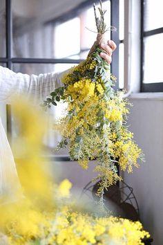 ミモザの季節が到来ミモザの基礎知識 選び方からアレンジまで Flower Images, Flower Art, Pansies, Daffodils, Le Mimosa, Green Terrace, Solomons Seal, Theme Pictures, Wedding Flower Decorations