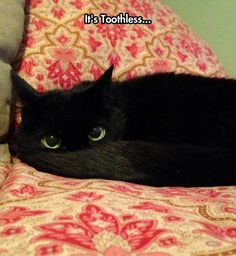 Toothless! I don't usually pin cat pics, but this is an exception!!!