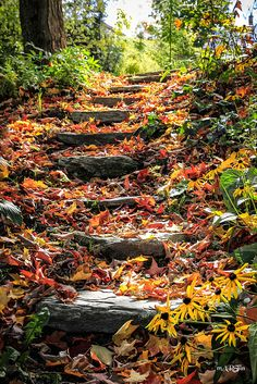 lori-rocks:  the old stairs covered in autumn.. (via ipernity: L'escalier - by mARTin Piché)
