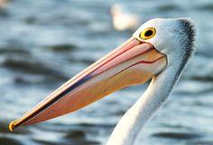 Types Of Birds | Futurity.org – Family tree links all 10,000 types of birds