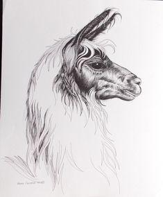 Tupper Llama Pen and Ink Original Animal Art