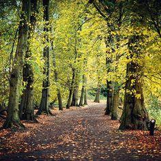 In the Heath of the Hampstead 😉🌳🍁🇬🇧 #London #HampsteadHeath #Nikon #D810 #autumn #tree #heath #woods #path #leaves #visitLondon #Hampstead #NikonNoFilter