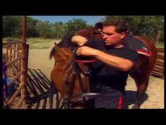 (29) La Collection Cheval - Comportement - Souffrance physique, souffrance mentale - YouTube