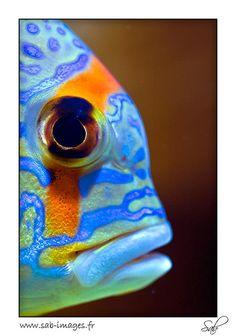 Fish of multi-colors - photo from Monaco Public Aquarium   #sealife #reef tank