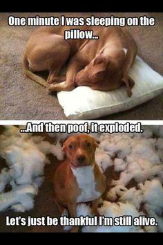 funny dog memes humor ~ funny dog memes + funny dog memes hilarious + funny dog memes humor + funny dog memes videos + funny dog memes puppies + funny dog memes with captions + funny dog memes hilarious laughing + funny dog memes funniest animals Funny Dog Jokes, Dog Memes, Funny Dogs, Cute Dogs, Funny Humor, Dog Humor, Funny Puppies, Silly Jokes, Funny Minion