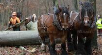 dans la forêt du Tannenwald (68)