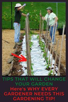 garden ideas Gardening For Beginners, Gardening Tips, Urban Gardening, Shade Garden, Garden Plants, Starting A Vegetable Garden, Homestead Gardens, Rain Garden, Weed Control