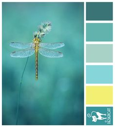 Dragonfly Dreams - Teal, turquoise, blue, pastel, yellow, buttermilk Designcat Colour Inspiration Board