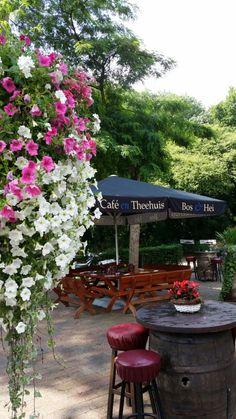 Café Theehuis Bos & Hei Sint – Bosrijke omgeving in 't Gooi om te eten en drinken