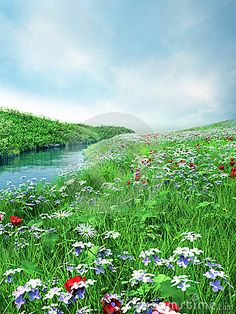 Spring meadow...