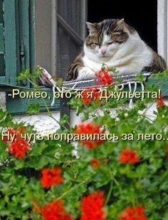 Джульетта поправилась к лету & Мемы про кошек & Фото | МУРЧИМ.РФ