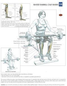 http://bestweightgainer.co.uk Seated Barbell Calf Raises ~ Re-Pinned by Crossed…