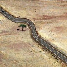 This one really made me smile... bending the road to save the tree... then I remembered our man made bridge to paradise in Key West :(