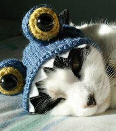 Une tête de monstre bleu pour minou
