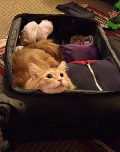 Take Me with You Please - 16 Hilarious Cats