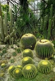 Резултат с изображение за кактуси