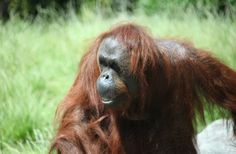 Future Zoos: What Will They Look Like? : Discovery News