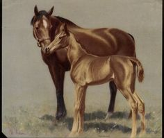 CW Anderson mare and foal