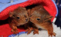 Adorable baby squirrels.