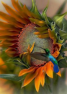 Gorgeous sunflower!!! Bebe'!!! Cute little hummingbird!!!