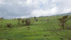 Check out today's blog post for the top #safari attractions in #Tanzania!