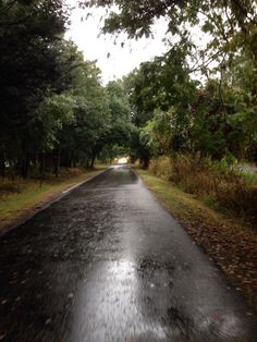 Trail Running in the rain.