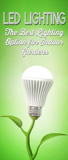 LED Grow Lights: The Best Lighting Option for Indoor Plants & Gardens