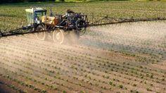 les 11 fruits et légumes les plus contaminés par les pesticides L'utilisation des pesticides tels qu'on les connaît (insecticides, fongicides et herbicides) a commencé dans les années 70. Quarante ans plus tard, cette pratique est devenue règle d'or et de Lire la suite →