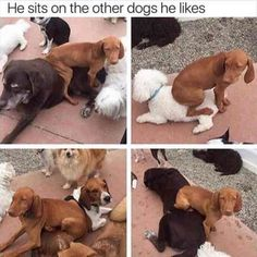 Funny Animal Pictures Of The Day (22 Pics) #funny #animals #dogs #cats #humor #memes #pictures #LandscapeDesign
