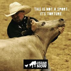 Violently wrestling a terrified animal to the ground is not a sport. It's torture.