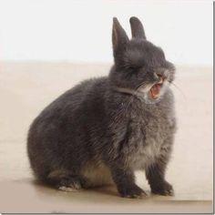 Dwarf bunny sneeze..momma..lol beware..lol