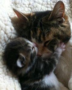 Mama's Love                                                                                                                                                                                 More