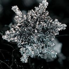 Snowflake - google images.
