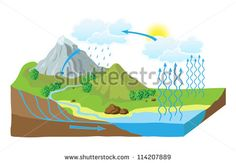 Image from http://image.shutterstock.com/display_pic_with_logo/9596/114207889/stock-vector-vector-schematic-representation-of-the-water-cycle-in-nature-114207889.jpg.