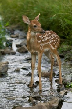sweet baby - love when they still have their spots : )/How sweet...