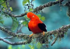 Home to the highest density of bird species per acre on Earth, the country is a birder's paradise