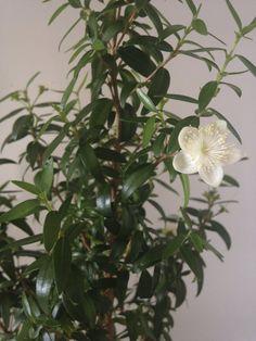Aloe Vera, Health, Flowers, Plants, Gardening, Cactus, Psychology, Health Care, Lawn And Garden