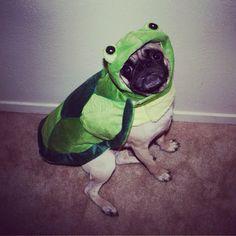 Turtle Pug
