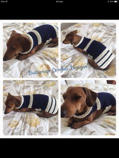 Crochet dog coat for Dachshunds