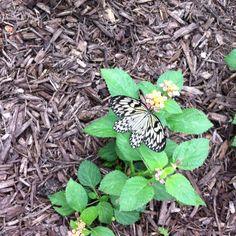 Butterfly from butterfly farm in Georgia